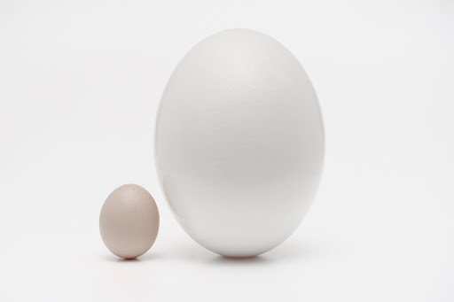 Small and large eggs juxtaposed